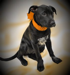2021 03 03 - HHS Pet Foster Family Laschobers Mari Web